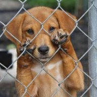 Shelterdog