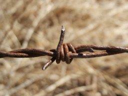 barbed wire Bob